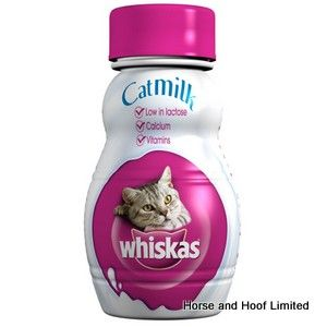 Milk For Cats