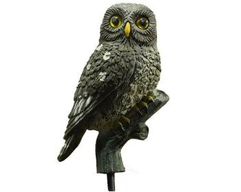 Sport Plast Little Owl